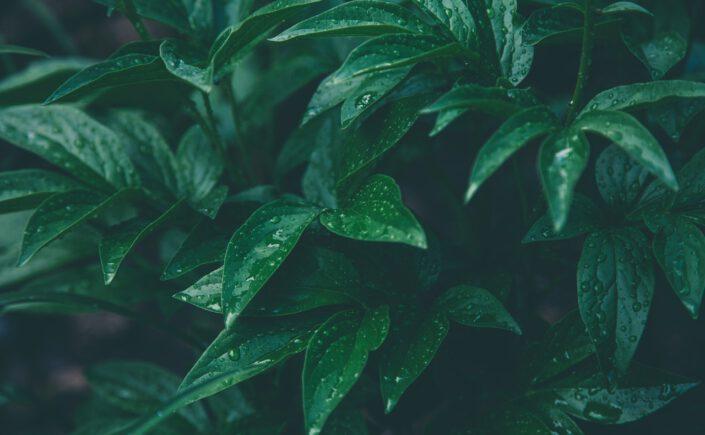 border planten pakket